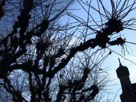 bäumewinter